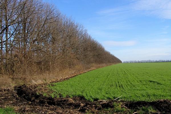 Партпроект поможет возродить лесополосы в Крыму